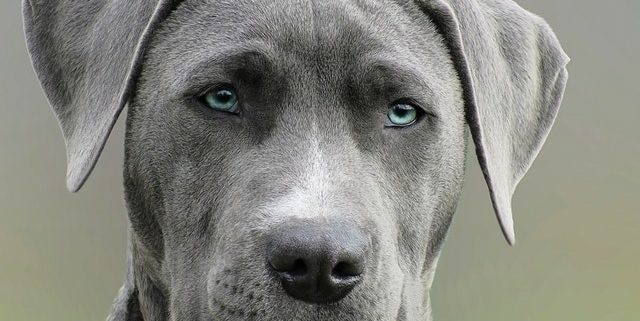 serious dog