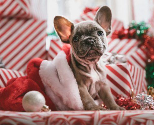 dog gift